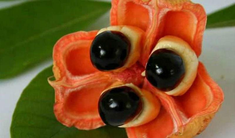 20085 20 экзотических фруктов со всего света, о которых вы не слышали