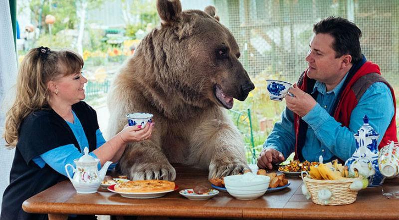 23846 Большой, плюшевый, твой: история медведя Степана, который живет в российской семье