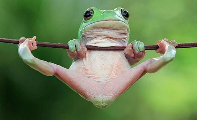 23364 Царевна-лягушка: индонезиец снимает неожиданные грани обычных лягушек