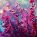 23100 Цветы от польской фотохудожницы Барбары Флорчик