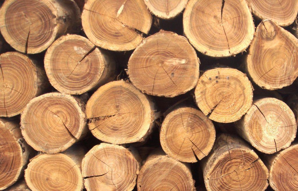 27303 Обычную древесину сделали более прочной, чем сталь или титан