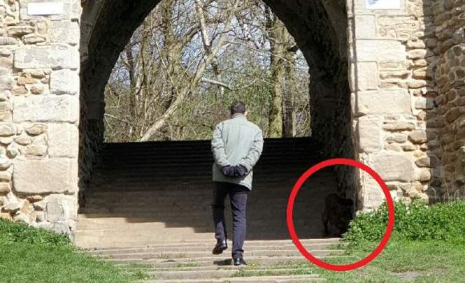 106888 В английском парке появилось какое-то непонятное существо