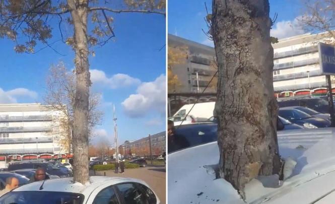 116994 Во Франции автомобиль был странным образом пронзен растущим деревом