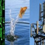 117686 Даже рыба сходит с ума в Ухане. Новый вирус, 5G или перезагрузка Системы