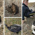 118015 COVID-19: что убивает людей и птиц?