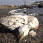 118109 В Парагвае появилась река из мертвой рыбы