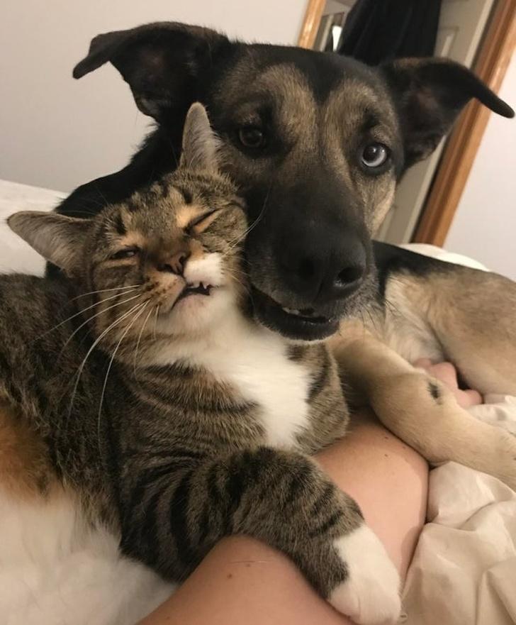 118354 Доказательство того, что выражение — «как кошка с собакой», теряет свою актуальность