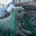 119619 Парень вырвал бездомного пса из рук отловщиков, которые хотели его усыпить