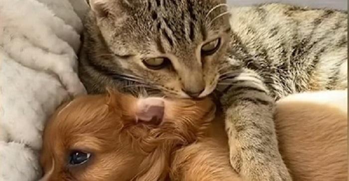 120762 Чем закончилось история, как щенка-потеряшку, защищал бездомный кот
