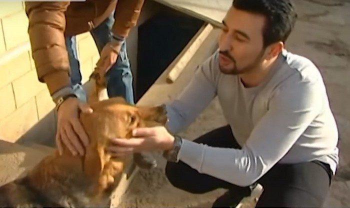 121639 Парень из Баку спас уже 350 искалеченных собак!