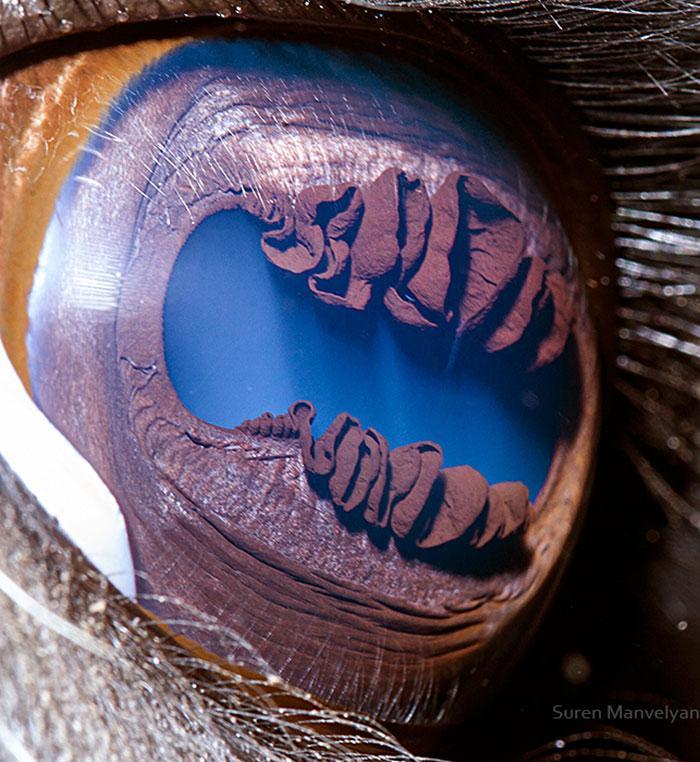 121116 Зрачки животных с планеты Земля, выглядят именно так