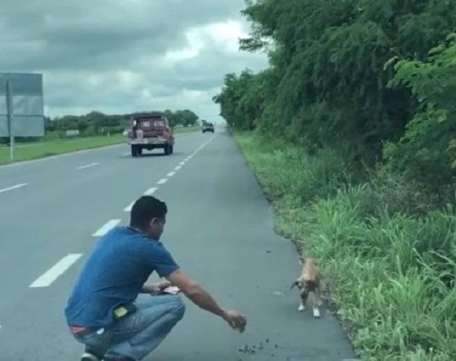 122844 Робко стоящая на дороге, больная и голодная собака, ждала чтобы хоть одна машина остановилась ради нее