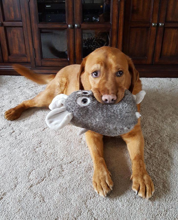 125067 24 ярких доказательств того, что не только детишкам, но и всем домашним животным, очень нужны свои игрушки!