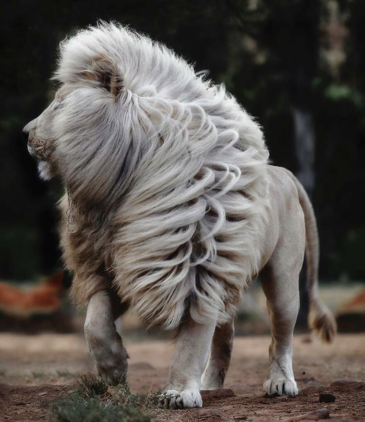 127977 Британский фотограф увековечил царей природы: величественные и грозные