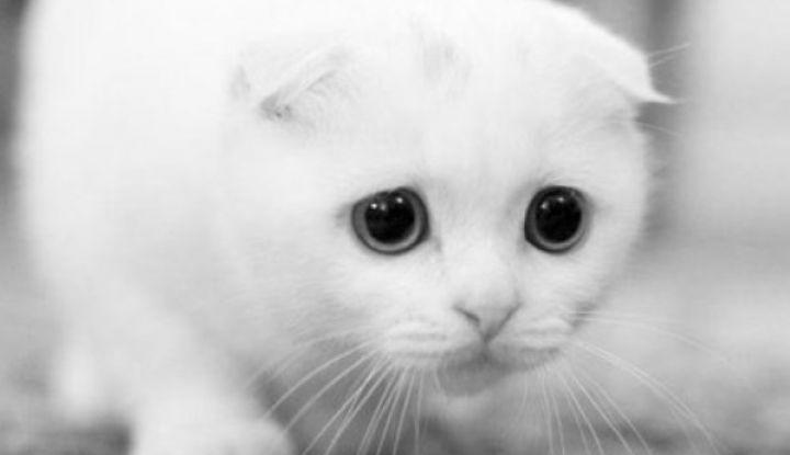 142661 Когда меня не станет, через неделю, придет к двери белый кот. Впусти его, он счастье принесет